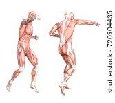 conceptual anatomy healthy... | Shutterstock . vector #720904435