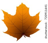 maple leaf isolated on white... | Shutterstock .eps vector #720911641