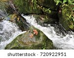 an image of a creek in the... | Shutterstock . vector #720922951