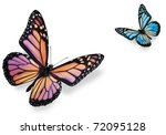 Stock photo monarch butterflies isolated on white flying towards center of frame 72095128