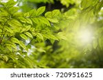 morning nature with leaf... | Shutterstock . vector #720951625