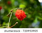 palmengarten the botanischer... | Shutterstock . vector #720953905