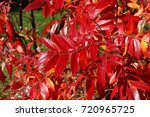 red color autumn nature... | Shutterstock . vector #720965725