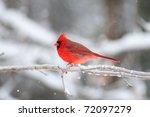 Northern Cardinal Sitting On An ...