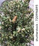 vegetations | Shutterstock . vector #720996895