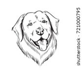 Labrador Dog Illustration