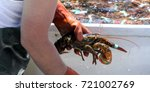 A Lobsterman Sorting His Fresh...