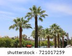 palm trees tropical nature... | Shutterstock . vector #721017259