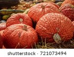 Red Warty Thing Squashes ...