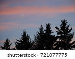 Spruce Trees At Dusk With Pink...