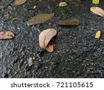 Small photo of Fall leaves