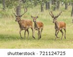 deer  red deer | Shutterstock . vector #721124725