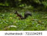 Small photo of squirrel with feed