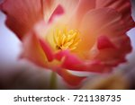 flower in macro  fine art. | Shutterstock . vector #721138735