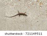 small lizard on the wall | Shutterstock . vector #721149511