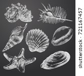 hand drawn seashells sketches... | Shutterstock .eps vector #721167457
