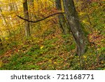 beautiful forest background in... | Shutterstock . vector #721168771