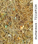 fallen golden pine needles on a ... | Shutterstock . vector #721169134