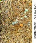 fallen golden pine needles on a ... | Shutterstock . vector #721169164