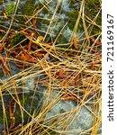 fallen golden pine needles on a ... | Shutterstock . vector #721169167