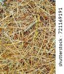 fallen golden pine needles on a ... | Shutterstock . vector #721169191