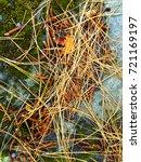 fallen golden pine needles on a ... | Shutterstock . vector #721169197