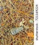fallen golden pine needles on a ... | Shutterstock . vector #721169224