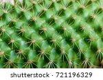 Closeup View Of Green Cactus A...