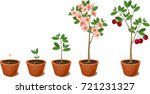 plant growing from seed to... | Shutterstock .eps vector #721231327