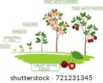 plant growth stage. plant... | Shutterstock .eps vector #721231345