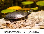 Turtle Soaking Up The Sun On A...