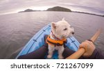 west highland white terrier... | Shutterstock . vector #721267099