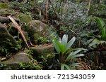 jungle  tropical rainforest  of ... | Shutterstock . vector #721343059