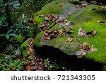 jungle  tropical rainforest  of ... | Shutterstock . vector #721343305