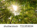 evergreen forest location at ... | Shutterstock . vector #721353034