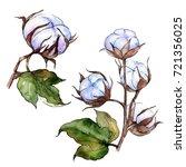 wildflower cotton flower in a...   Shutterstock . vector #721356025