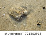 coral on the beach  | Shutterstock . vector #721363915