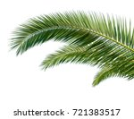 isolated palm leaves on white... | Shutterstock . vector #721383517