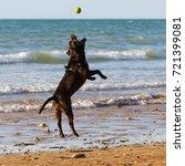 black staffordshire terrier... | Shutterstock . vector #721399081