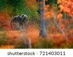Bear Hidden In Orange Red...
