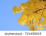 autumn background  tree with... | Shutterstock . vector #721450015