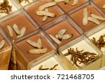 crickets  worms and larvas... | Shutterstock . vector #721468705
