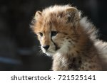 Cheetah Children