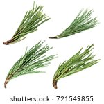 Pine Tree Branch Isolated On...