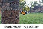 beautiful butterfly in... | Shutterstock . vector #721551889