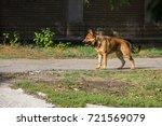 german shepherd walking in a... | Shutterstock . vector #721569079
