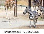 Zebras And Girrafes Standing I...