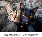 two friendly kittens taught to... | Shutterstock . vector #721603699