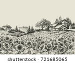 sunflower field vector | Shutterstock .eps vector #721685065