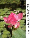 lotus flower | Shutterstock . vector #721691821